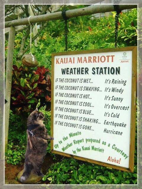 ハワイ 島 天気 予報