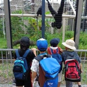 7/30遠足「東山動物園」へ行ってきました。の画像