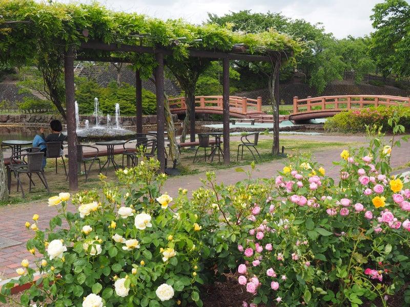 神戸町バラ公園2019その3-1