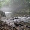 今年2回目の岐阜渓流への画像