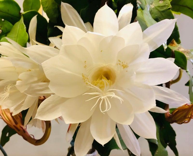 花 美人 月 言葉 怖い 下 美人、高嶺の花と言われるのが怖い。