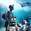 初めての水族館の画像