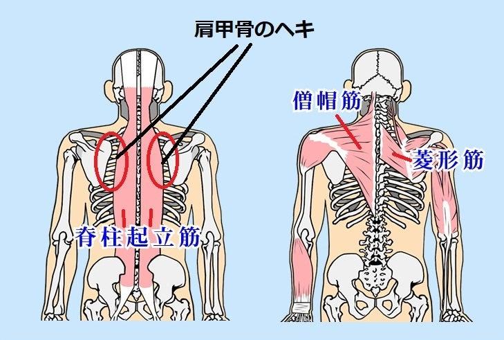 肩 甲骨 の 内側 が 痛い 肩甲骨内側が痛い・・・これってどんな症状?