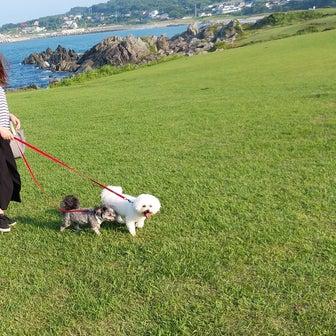種差海岸散歩   モコとココ
