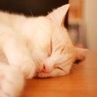 今の時期、眠いのはなんででしょうか?の記事より
