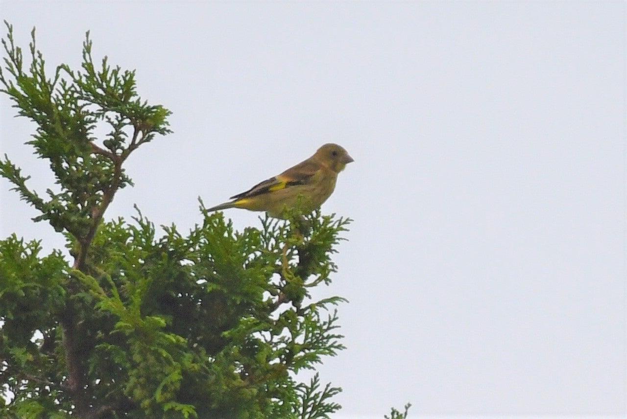 北海道 北広島・千歳川輪厚川合流地点鳥見(2019年7月29日)