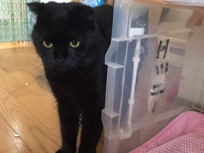 猫 里親 兵庫