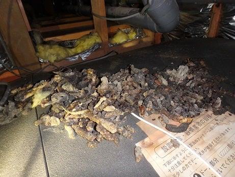 テンによる天井裏の糞被害