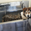 暑くなったので洗犬!の画像