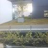 屋上緑化について!の画像
