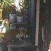 インターホンを押す猫!の画像