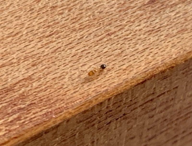 退治 おすすめ 室内 アリ 家の中に侵入する「アリ」を退治する方法 【ココカラクラブ】ドラッグストアのココカラファイン
