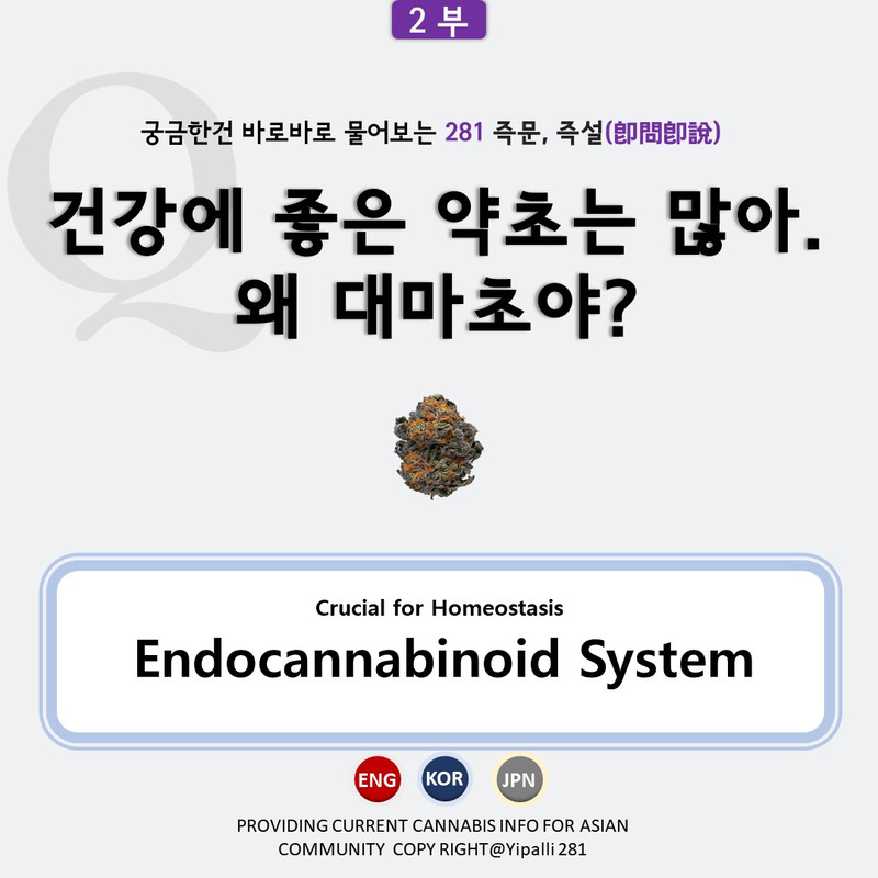 의료대마 대마초