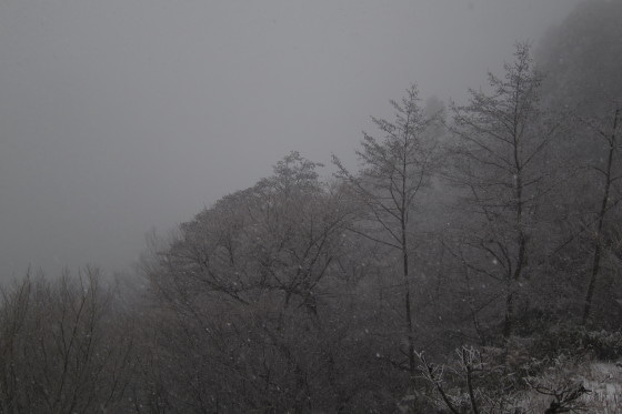 天気 金剛 山