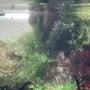 【水草水槽のノウハウ…