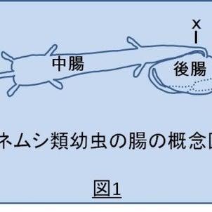 報文紹介「クワガタムシ幼虫の腸内」の画像