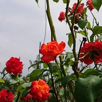 道端の花と空♥②