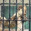 そして里子に出されるミナミヌマエビの画像