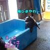 プールのフチ男くん(^^)/の画像