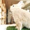 ウサギの快適な温度とは・・・?