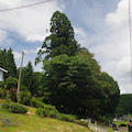 八幡神社  広島県府中市上下町岡屋