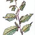植物 2728[一日一枚のクーピー画]