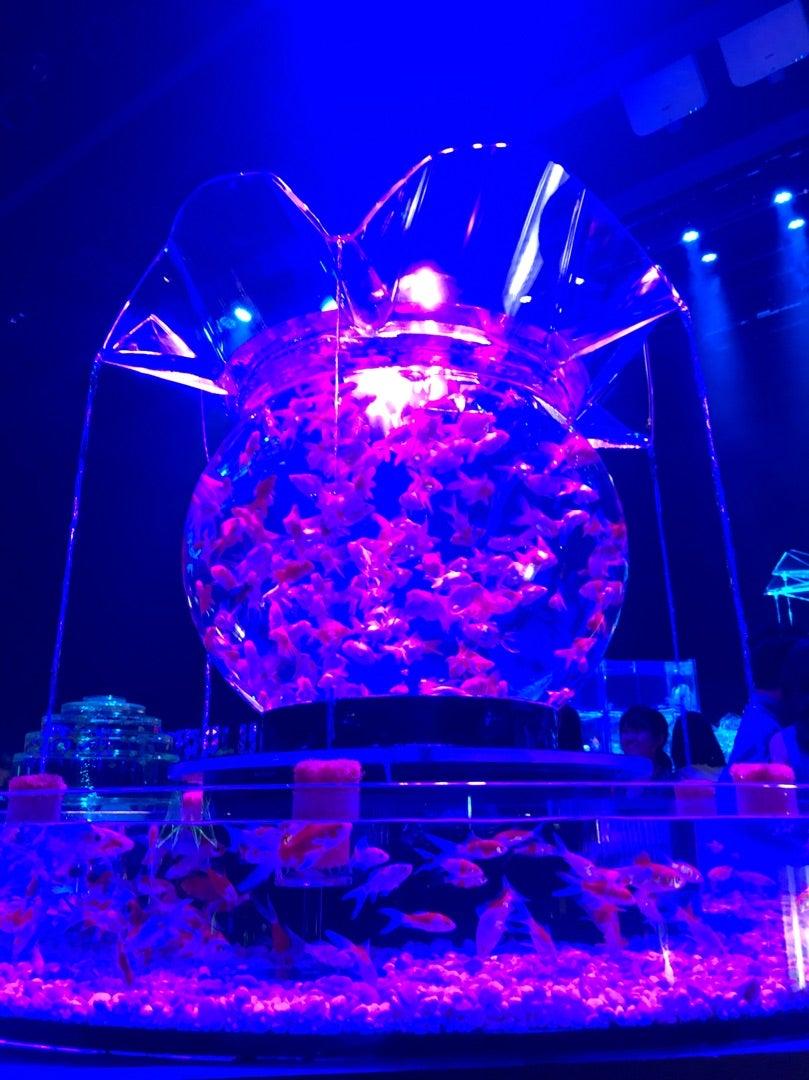 アート アクアリウム 病気 【炎上】アートアクアリウムこれはひどいまるで金魚に虐待⁈しかし「...