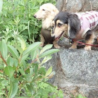 初7泊8日キャンプ⑧(ベルガで川遊び②)in ビブリッジキャンプ場(8/11 3日目)
