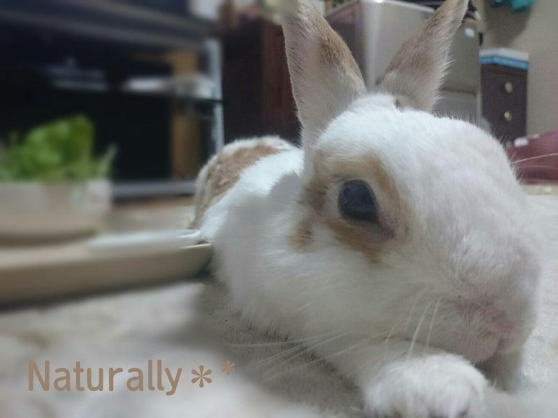 うさぎ 食欲 が ない ウサギの食欲が急になくなりました。 -ウサギを飼って一年になります。-