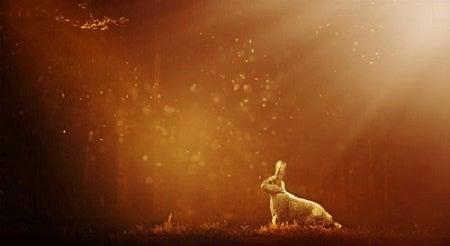 ウサギ を 追う な