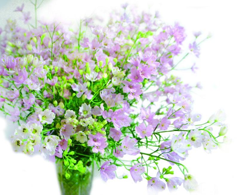 幸せの花さくらひめ