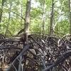 REDD+対象地での毎木調査の画像