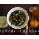 【レポート@大阪】茶言葉・魂の声を聴く中国茶会の記事より