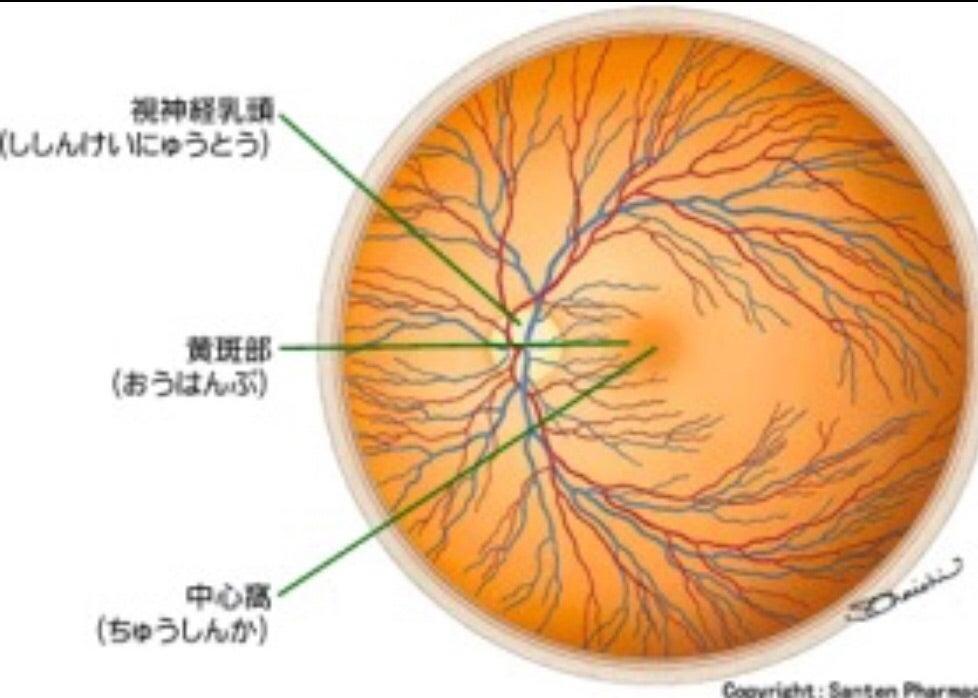 陥没 視神経 乳頭 人間ドックで「視神経乳頭陥凹 要精査」と言われた