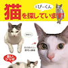 千葉県千葉市 猫の迷子2の画像