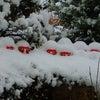 これがほんとに雪だるまだぁ~(^^)vの画像
