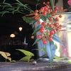 柚子収穫と山野草の画像