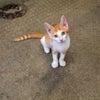 【保護猫・里親さん募集!】3匹の元気な子猫たち♪の画像