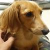 さいたま支店の愛犬家 樋口ですの画像