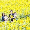 ひまわり撮影会の募集です!!|家族写真の出張撮影のF.O.T.Sの画像