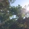 夏休み明けの朝のヨガの画像