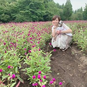 くじゅう花公園の画像