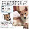 【拡散希望】迷子犬情報 続報です!の画像