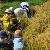 「お米手作り体験2021」一緒に田んぼの一年を過ごしませんか〜!?の画像