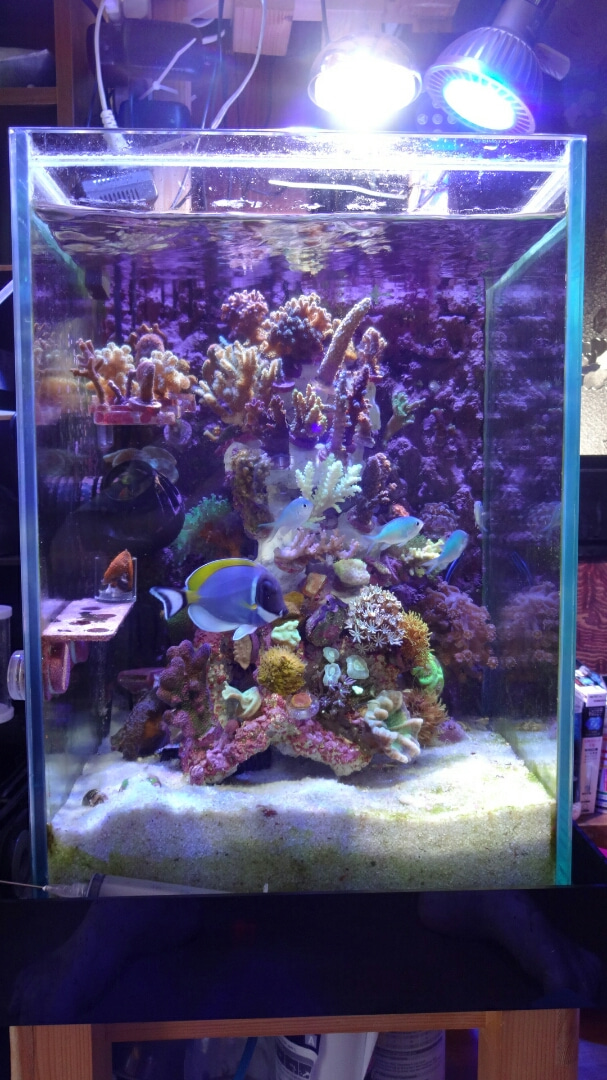 我が家の海水魚飼育日記、復活? | 我が家の海水魚飼育日記