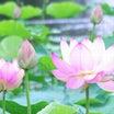 【お花の鑑定を始めた理由1】魂が輝く!楽しいをプレゼント❤