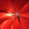 傘の中の世界。の画像