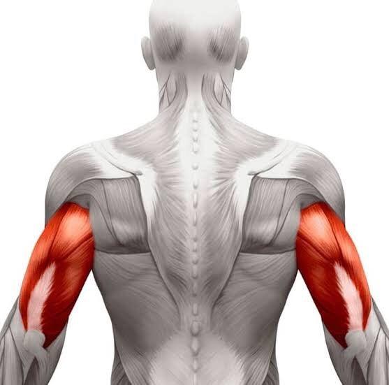 上腕 三 頭 筋 見てわかる上腕三頭筋の筋肉!図解11選