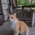 沖縄&奄美諸島love♥️旅行とグルメと夫の難病と向き合う日々