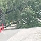 台風の被害の記事より